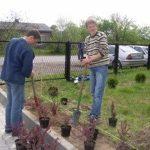 sadzenie drzew_small